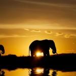 Elefanti_savana_830